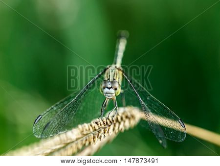 The Dragonfly beautiful the outdoors by natural.