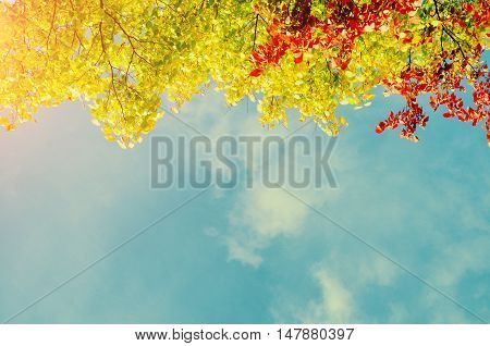 Colorful red yellow and green autumn leaves of tree autumn branch against the blue sunny sky with free space for text - autumn background in vintage colors