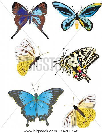 illustration with six different butterflies isolated on white background