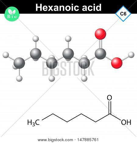 Hexanoic acid molecule - chemical formula and molecular structure 2d and 3d vector illustration isolated on white background eps 8