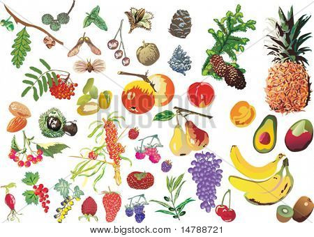 illustration with different fruits isolated on white background