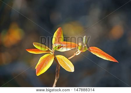 Narrow oblong colored autumn leaves on blurred background