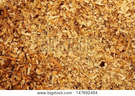 Damp wood chips scrap wood lying on the ground like a carpet. Close horizontal flat view from top.Interesting background and texture.