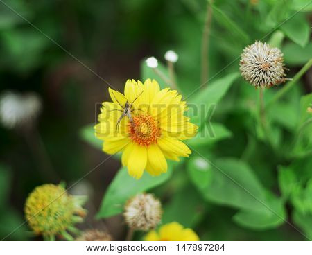 Spider sitting on a yellow flower. Great plan.