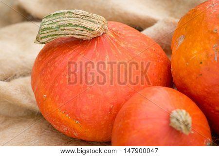 Detail of Hokkaido pumpkins with stem, still life