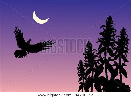 illustration with night scene with flying bird