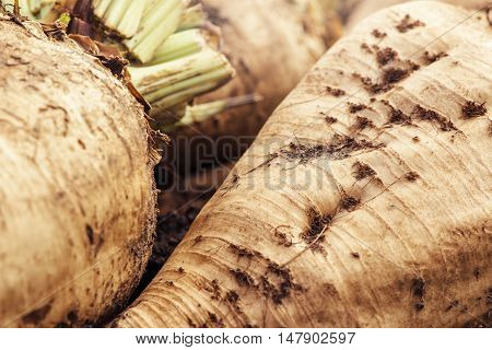 Harvested sugar beet crop root pile on the ground selective focus