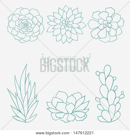 vector floral sketch, hand drawn succulents and cactus plants