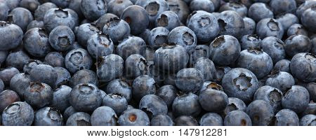 Background Of Fresh Blueberry Close Up