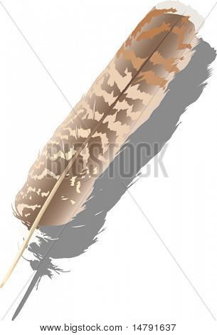 illustration with variegated single feather isolated on white background