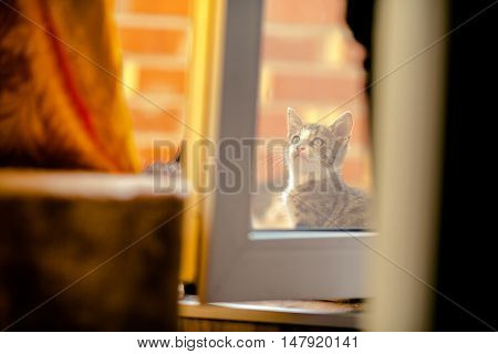 Lovely charming  Kitten behind the glass outside to windows