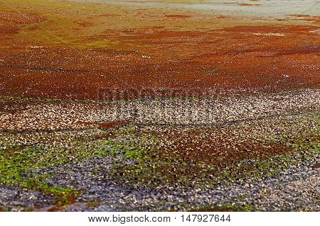 Colorful texture in a swamp. Horizontal image.