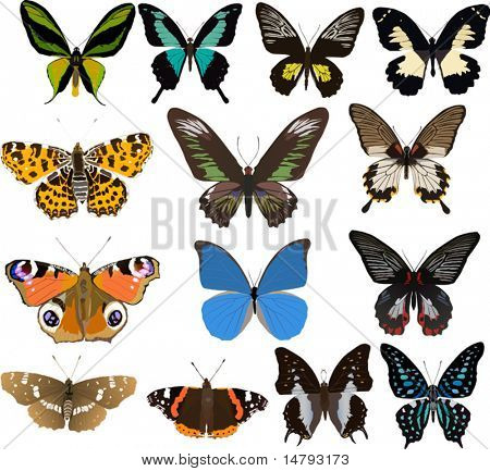 illustration with fourteen color butterflies isolated on white background