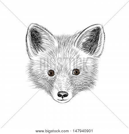 Fox. Wild animal fox head. Fox face looking at camera. Animal red fox head sketch isolated