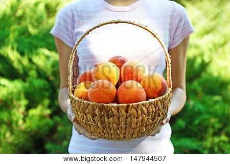 Woman holding basket of fresh peaches
