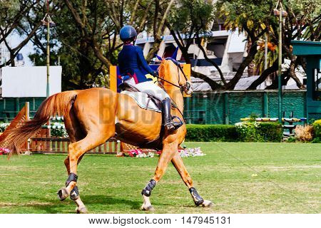 Young woman racing on his horse in a show jumping