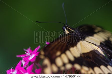 Butterfly On Tropical Flowers