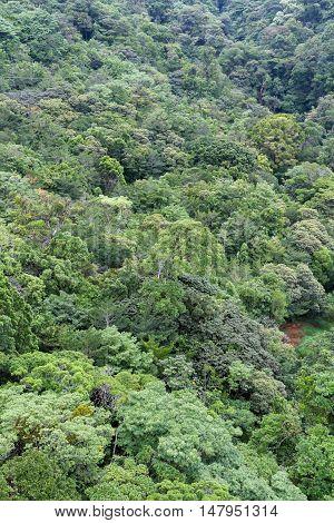 Tree Tops In Monteverde