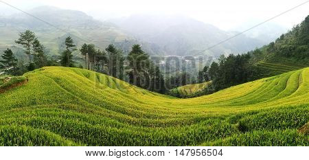 Rice fields on terraced of Mu Cang Chai, YenBai, Vietnam. Rice fields prepare the harvest at Northwest Vietnam. Vietnam landscapes.