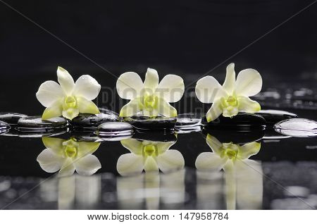 Still life with three white orchid with black stones