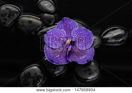 Purple orchid on black stones