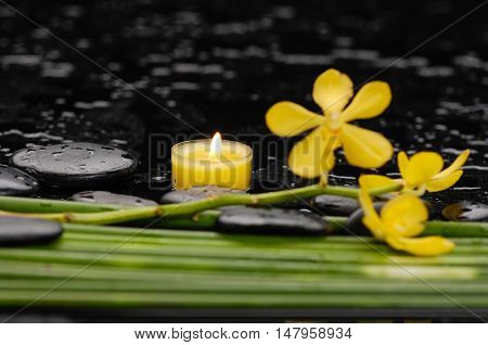 Yellow orchid with black stones with candle ,green plant-wet background