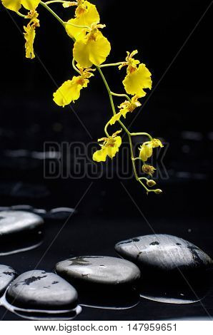 still life with yellow branch orchid and black stones
