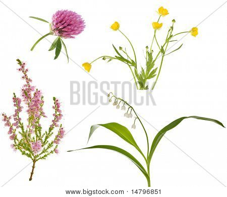 collection of four wild forest flowers isolated on white background