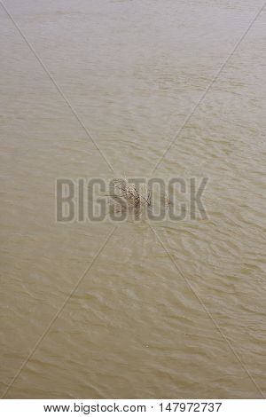 dry wood in dirty water close up