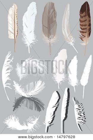 Abbildung mit fünfzehn Federn isoliert auf grauem Hintergrund