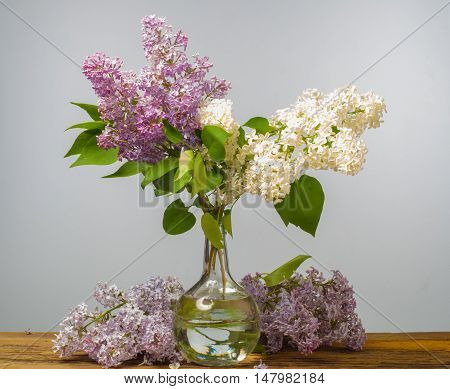 Spring. Lilac Flowers