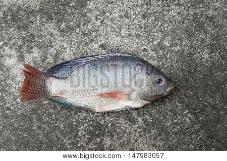 Tilapia And Nile Tilapia On Concrete Floor, Raw Fresh Freshwater Fish On Concrete Floor