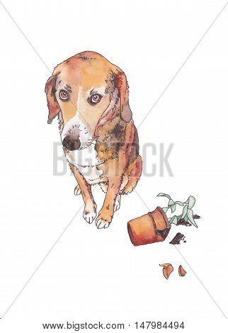 guilty dog near the broken flowerpot on white background
