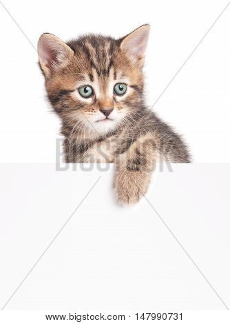 Cute kitten with a blank billboard for your text over white background