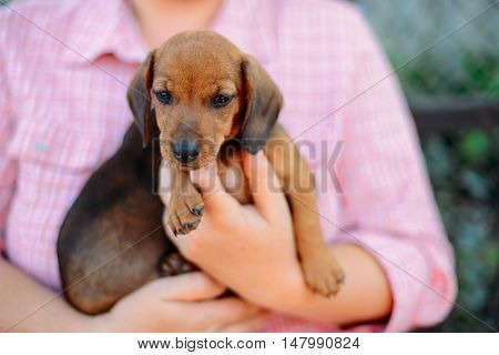 Dachshund puppy. Woman at the park holding his dog. Woman holding a dog in her arms