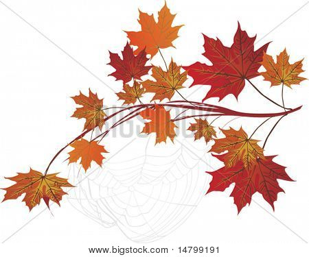 illustration with maple branch and spider web