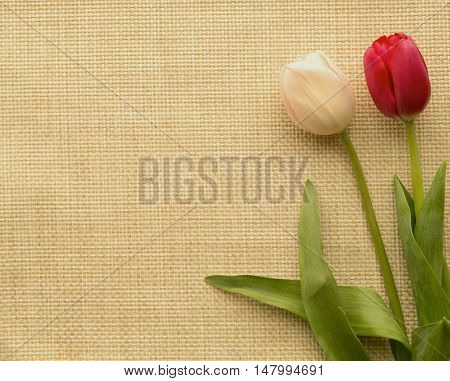Two red and pink of a tulip lay in the right corner of the on interwoven fabric.
