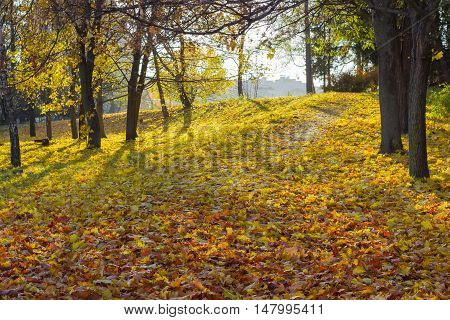 Walkway in the park is completely covered with fallen varicolored leaves in autumn day
