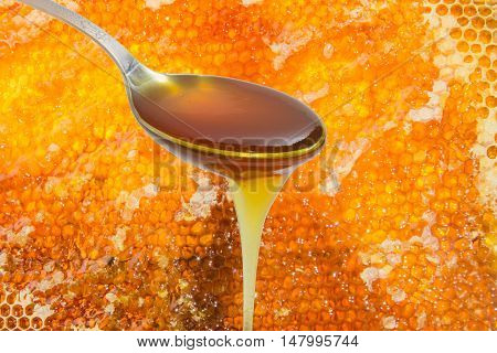 Spoon full of honey which flows down on the background of honeycomb