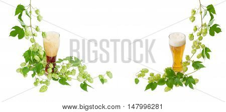 Background of two glasses of dark and lager beer with branches of hops with leaves and strobiles on a light background