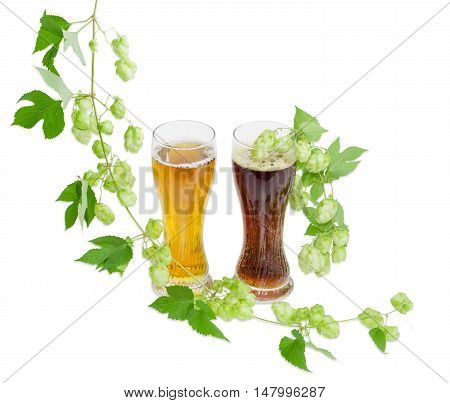 Two beer glasses with lager and dark beer and hanging branches of hops with leaves and strobiles on a light background