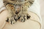 Tabby cat paws on backrest poster