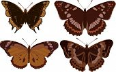 illustration with four different butterflies isolated on white background
