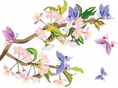 picture of floral design  - illustration with cherry tree flowers and butterflies on white background - JPG