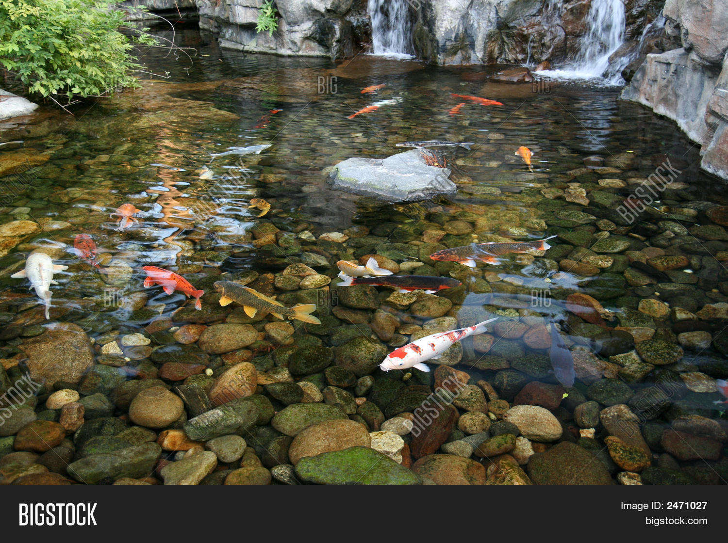 Japanese koi fish pond image photo bigstock for Koi pond supply of japan