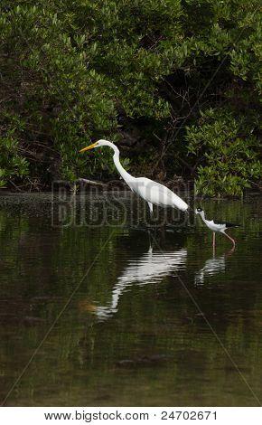 Great Egret And Black-necked Stilt