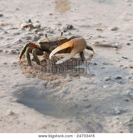 Krabbe, Loch zu schützen