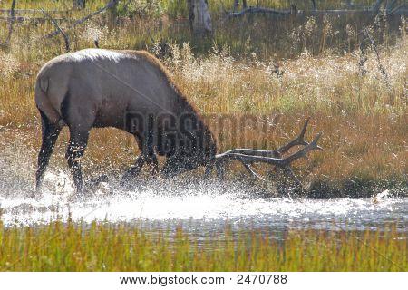 Elk Paw Water
