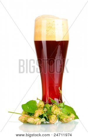 red beer with foam in glass and hop isolated on white