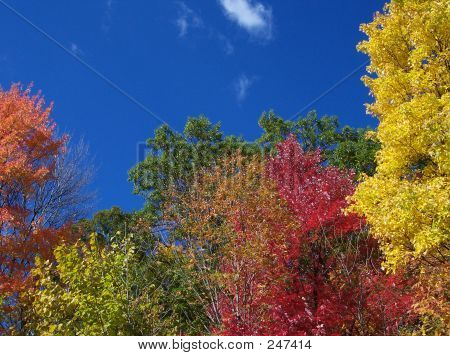 Colors Of The Fall Season